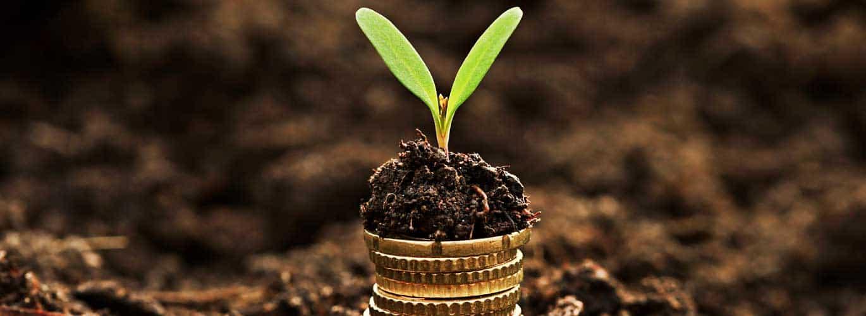 Finanzierung und Förderung - Pflanze wächst aus Geldstücken
