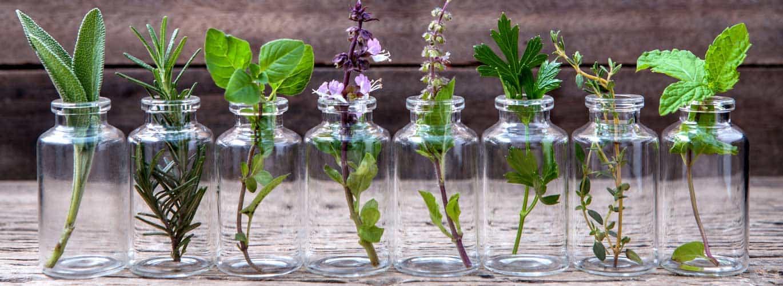 Ernährungsberater mit Fachrichtung Heilpflanzenkunde - verschiedene Kräuter in kleinen Gläsern
