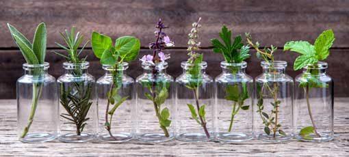 Ernährungsberater mit Fachrichtung Heilpflanzenkunde
