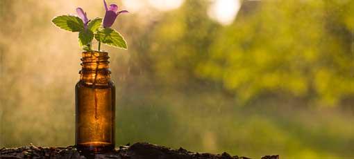 Per Fernstudium in der Bachblütentherapie zum gefragten Therapeuten werden