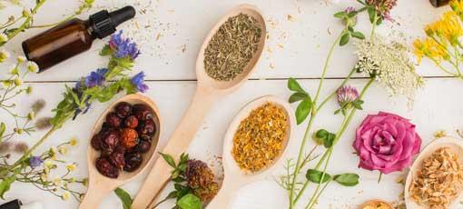 Homöopathie – starten Sie als Kräuterpädagoge durch!